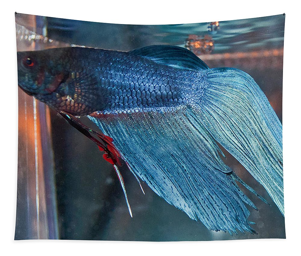 Betta Fish Tapestry featuring the photograph Bait The Betta by Tikvah's Hope