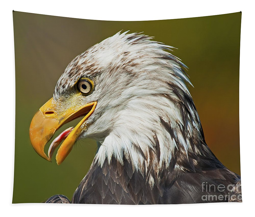 Nina Stavlund Tapestry featuring the photograph Bald Eagle... by Nina Stavlund