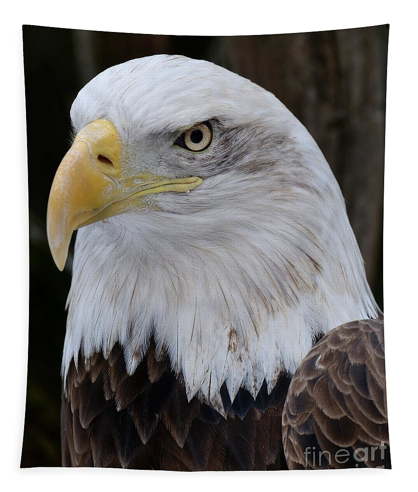 Bald Eagle Tapestry featuring the photograph Bald Eagle Portrait by Craig Leaper
