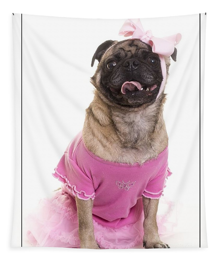 Clothes Tapestry featuring the photograph Ballerina Pug Dog by Edward Fielding