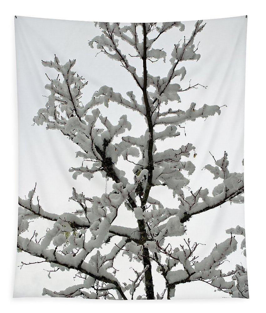 Bare Branches Tapestry featuring the photograph Bare Branches With Snow by Tikvah's Hope