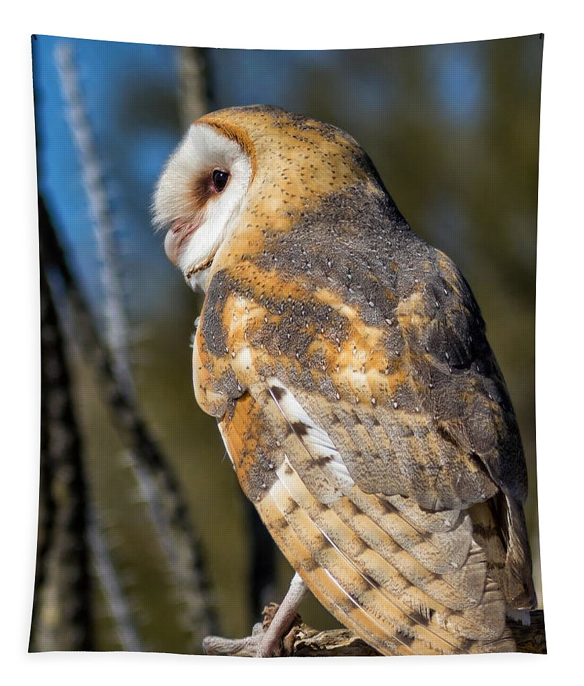 Barn Owls Tapestry featuring the photograph Barn Owl by Kathleen Bishop