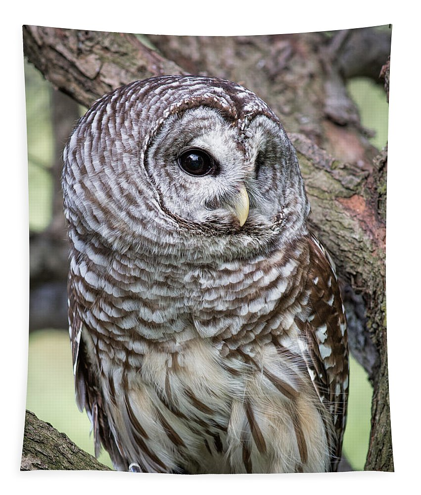 Barred Owl Tapestry featuring the photograph Barred Owl by Dale Kincaid