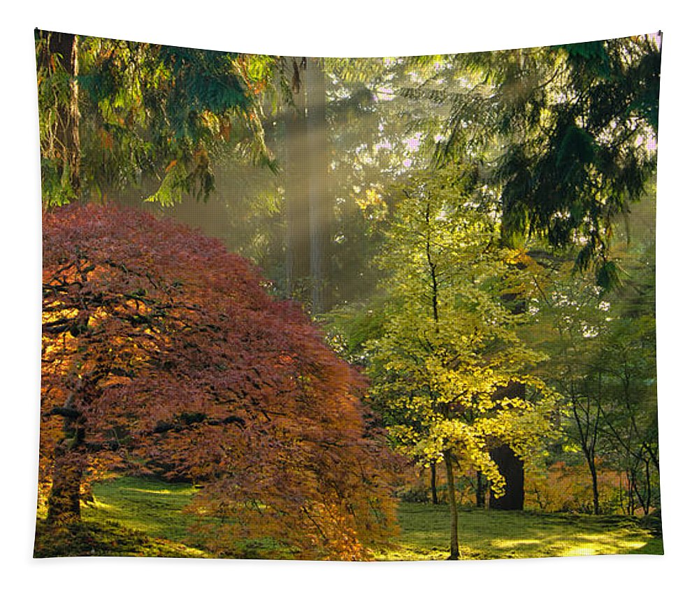 Japanese Maple Tapestry featuring the photograph Bathed In Morning Light by Don Schwartz