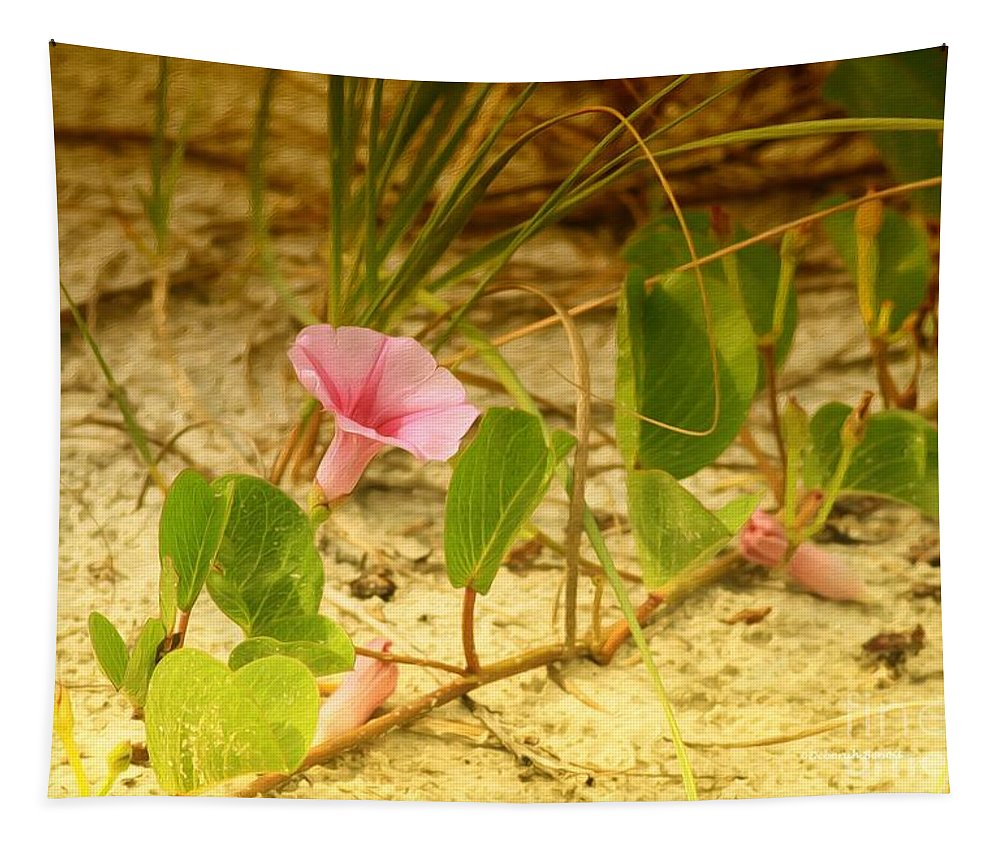 Morning Glory Tapestry featuring the photograph Beach Morning Glory by Deborah Benoit