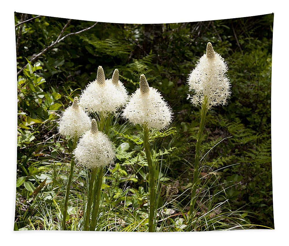 Bear Grass Tapestry featuring the photograph Bear Grass by Belinda Greb
