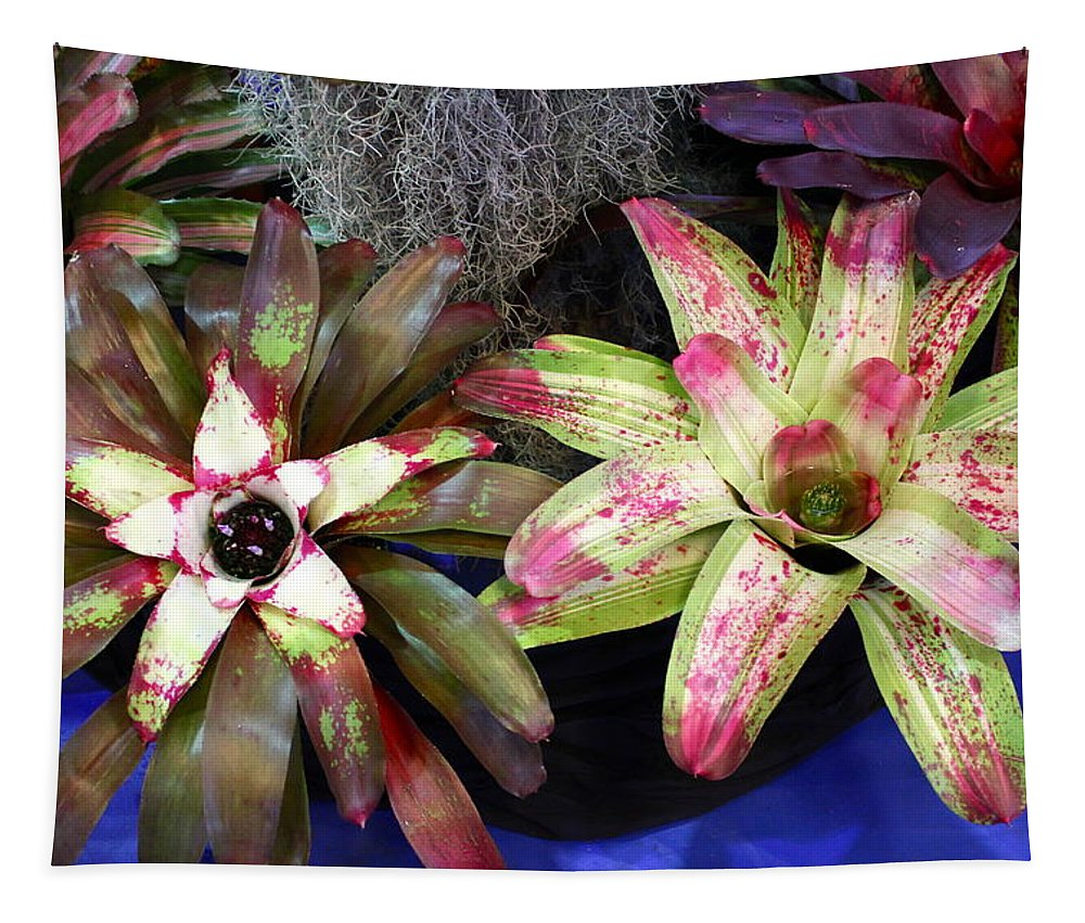 Bromeliad Tapestry featuring the photograph Beautiful Bromeliads by The Art of Alice Terrill