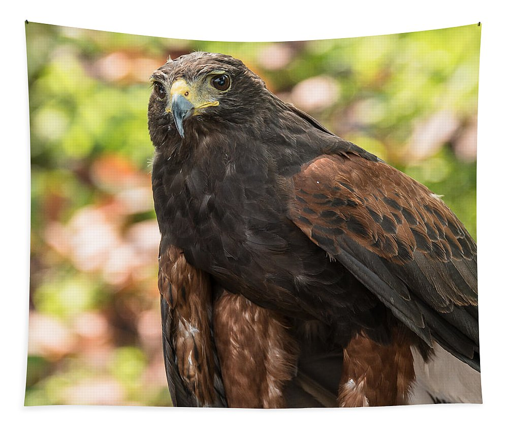 Harris Hawk Tapestry featuring the photograph Beautiful Harris Hawk by Yeates Photography