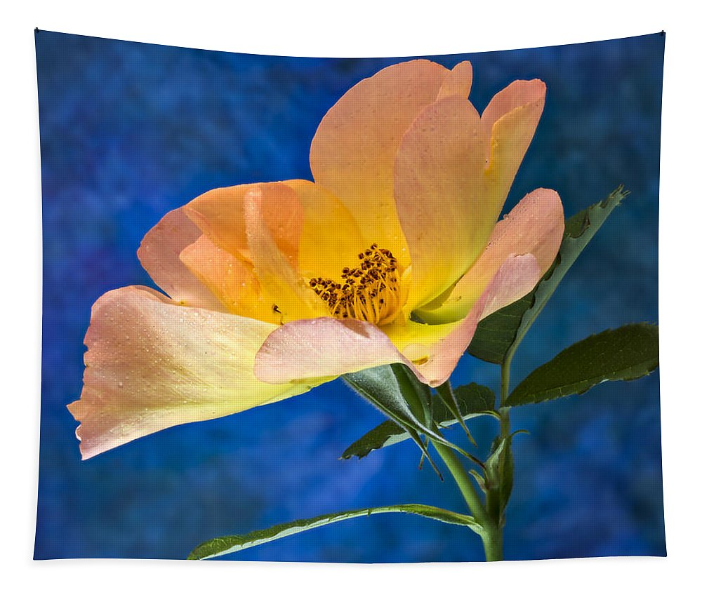 Rose Tapestry featuring the photograph Beautiful Single Rose by Jean Noren