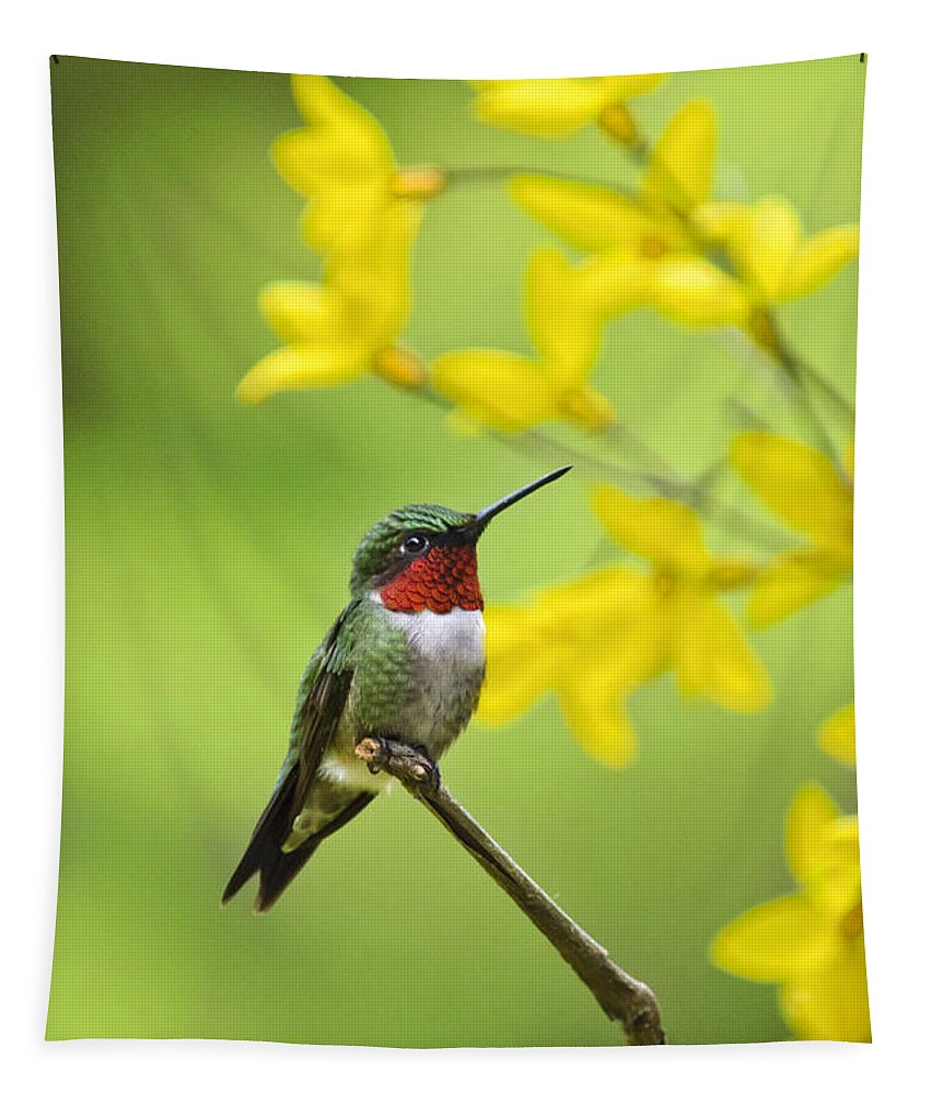 Hummingbird Tapestry featuring the photograph Beautiful Summer Hummer by Christina Rollo