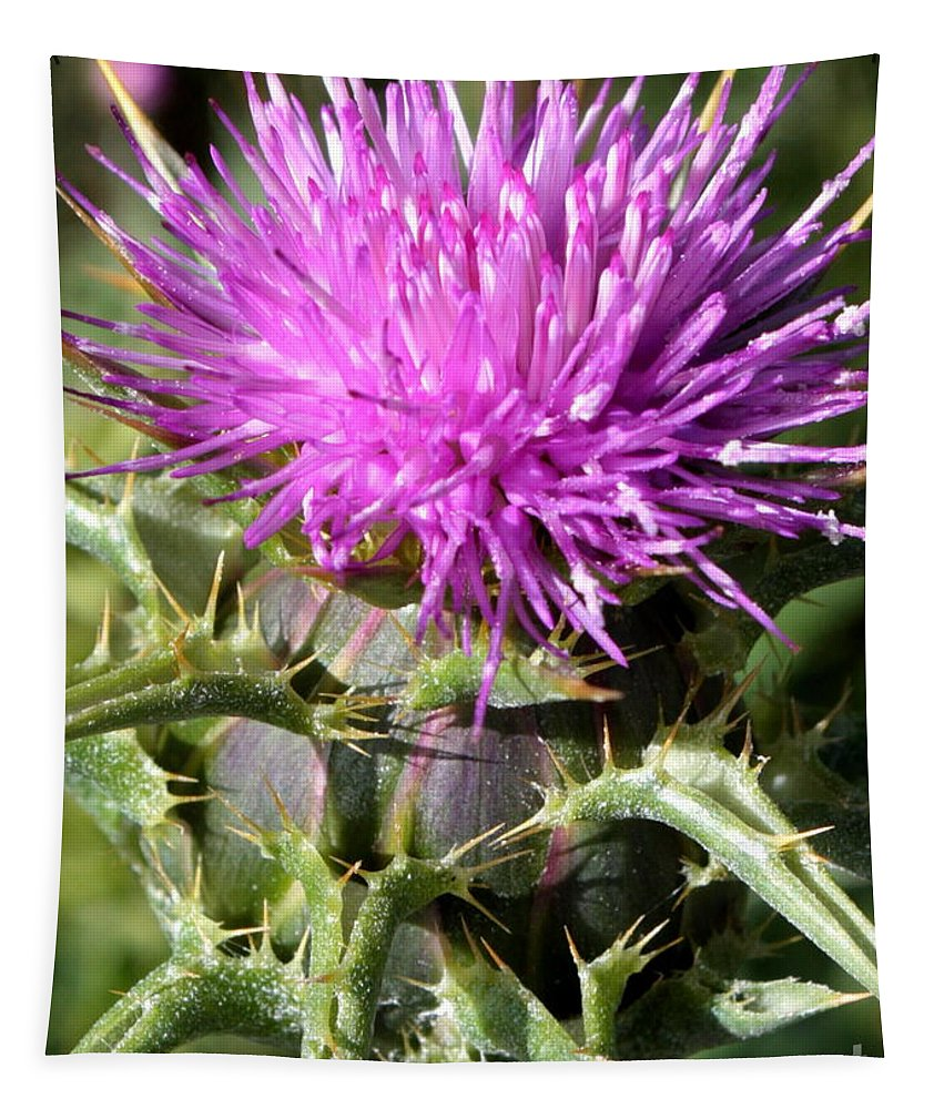 Thistle Tapestry featuring the photograph Beautiful Thistle by Carol Groenen