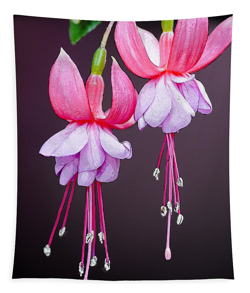 Roses Tapestry featuring the photograph Beautiful Two by Ben Yassa