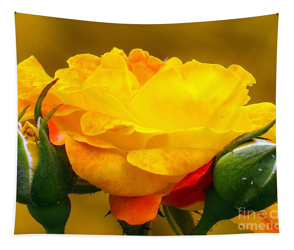 Rose Tapestry featuring the photograph Beautiful Yellow Rose by Zina Stromberg
