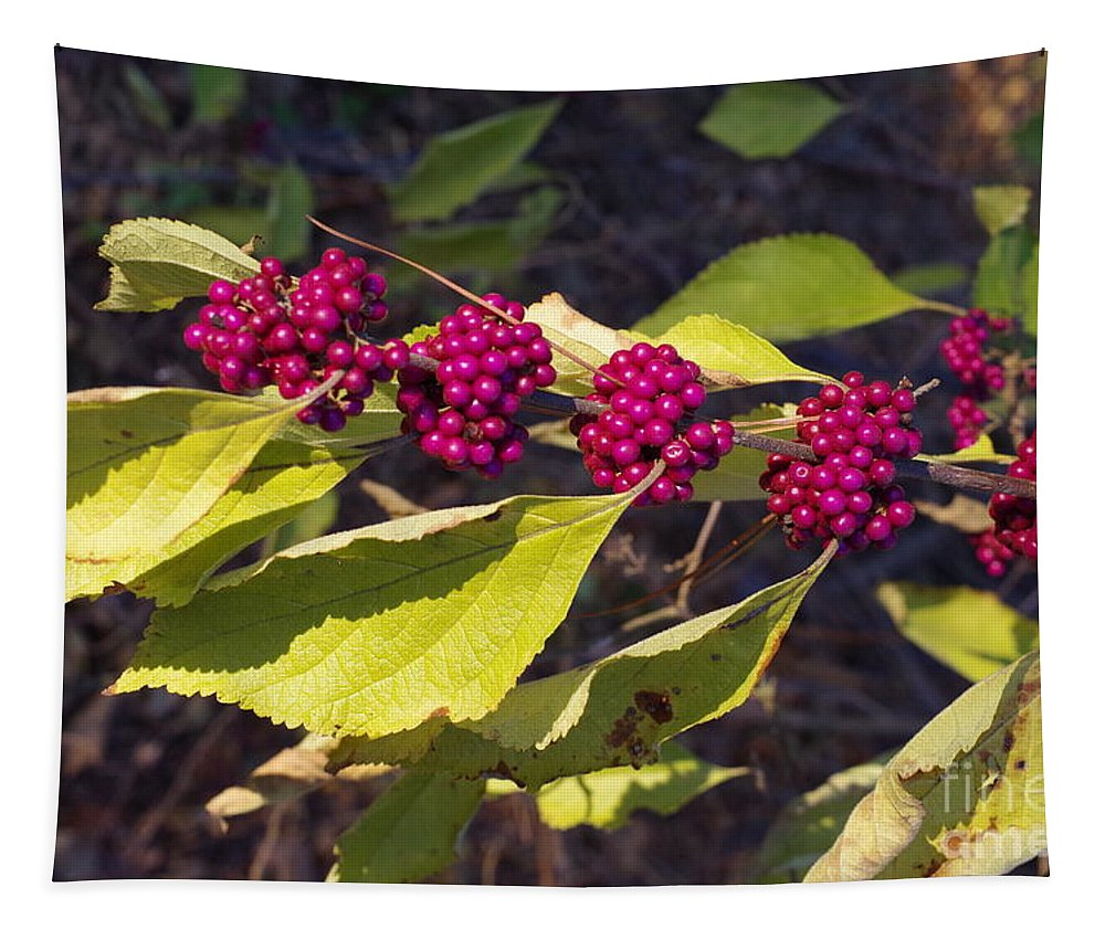 Beautyberry Tapestry featuring the photograph Beautyberry by Gary Richards