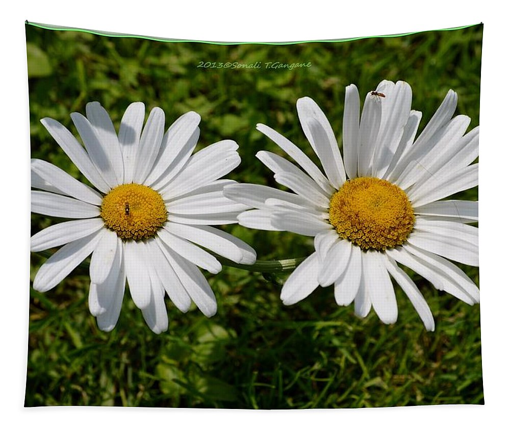 White Tapestry featuring the photograph Bellis Perrenis by Sonali Gangane