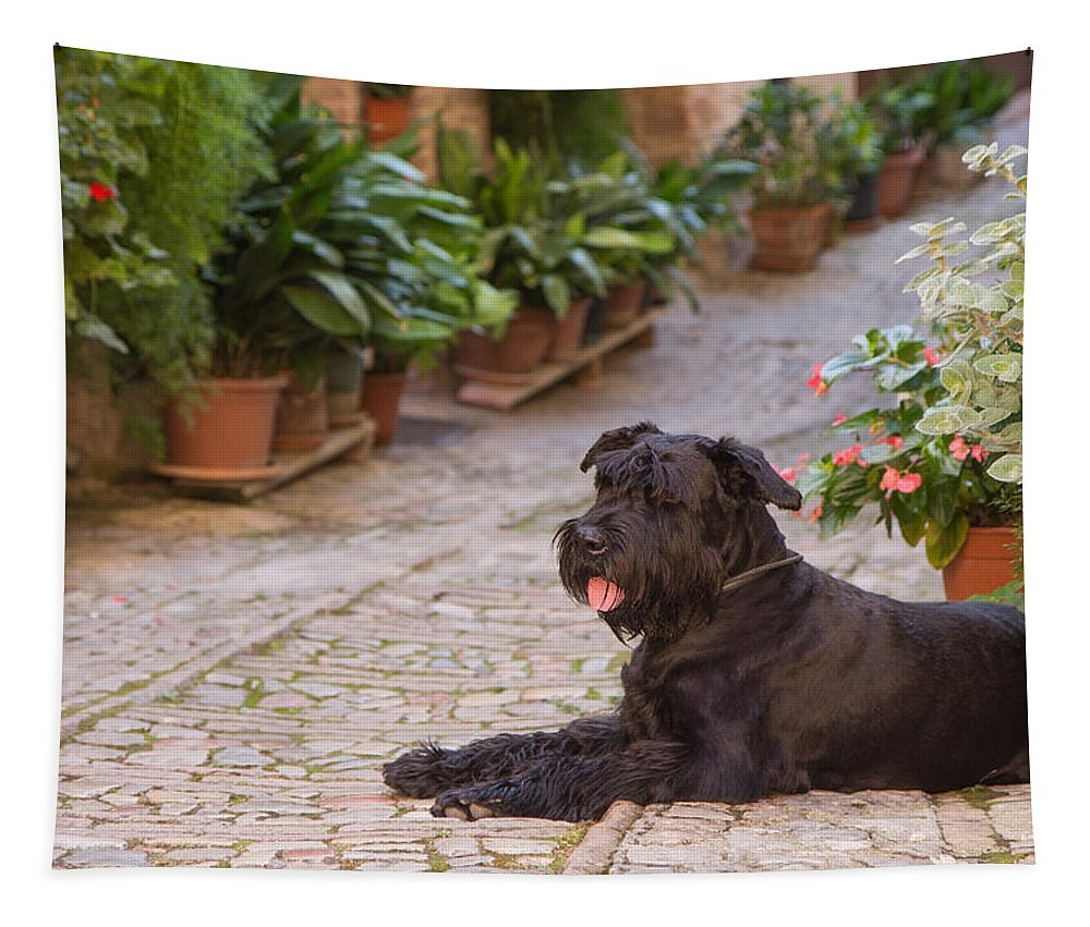 Spello Tapestry featuring the photograph Big Black Schnauzer Dog In Italy by Jaroslav Frank