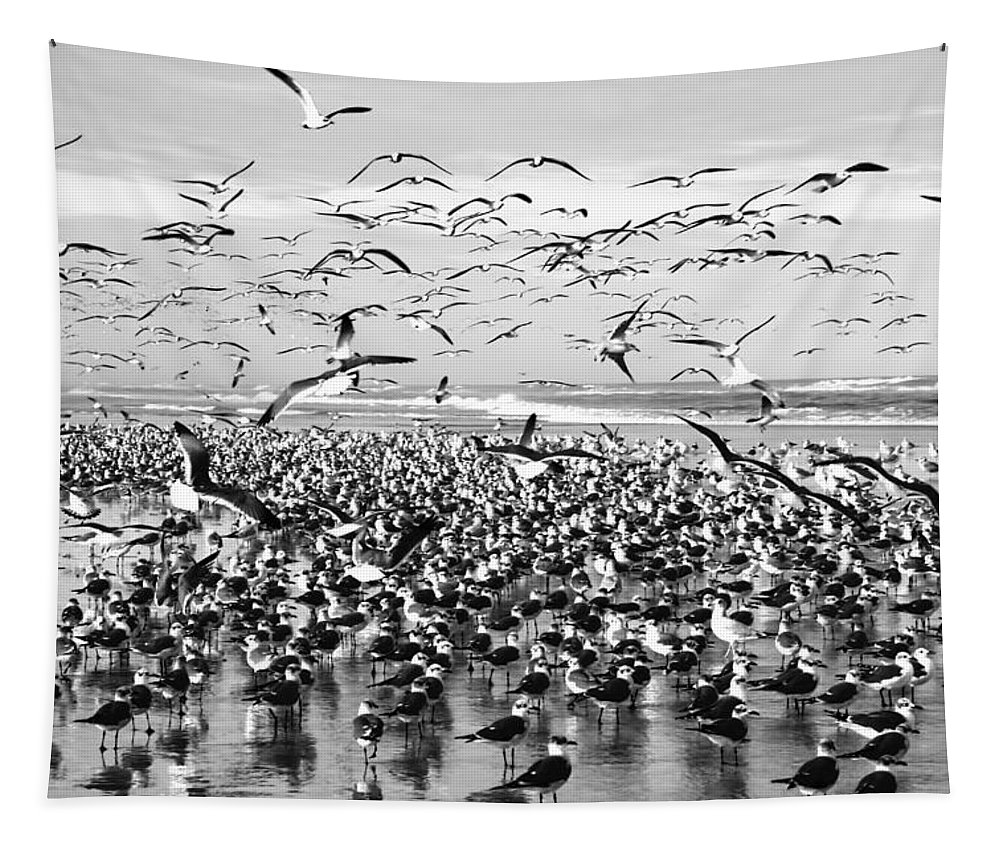 Birds On The Beach Everywhere In Black And White Tapestry featuring the photograph Birds by Alice Gipson