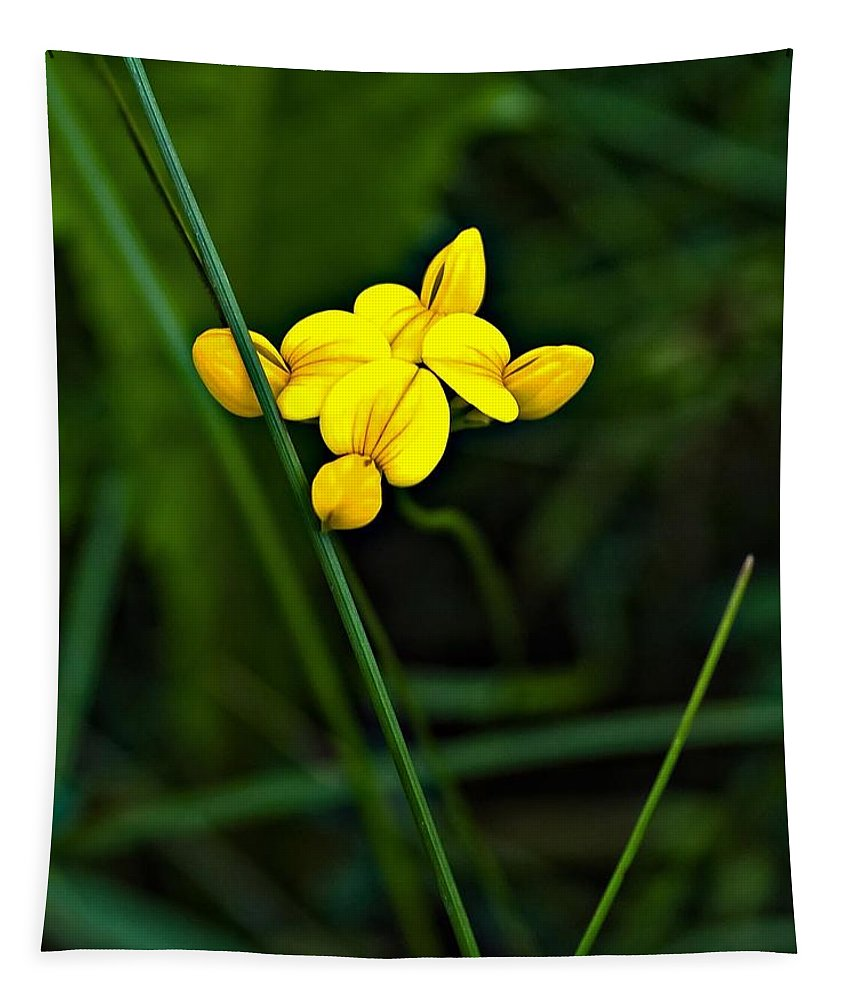 Flowers Tapestry featuring the photograph Bird's-foot Trefoil by Steve Harrington