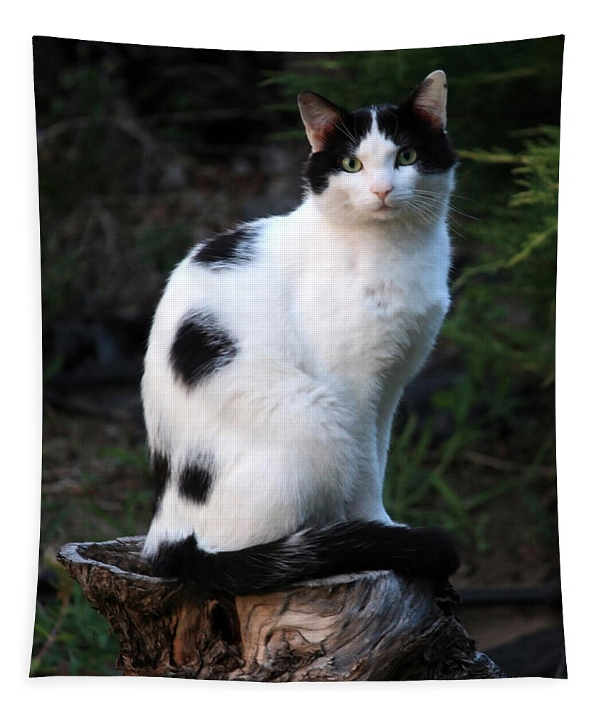 Cat Tapestry featuring the photograph Black And White Cat On Tree Stump by Carol Groenen