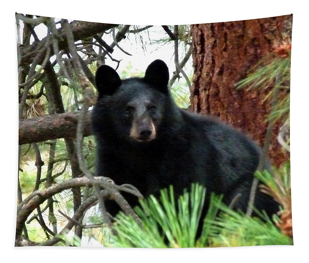 Black Bear Tapestry featuring the photograph Black Bear 1 by Will Borden