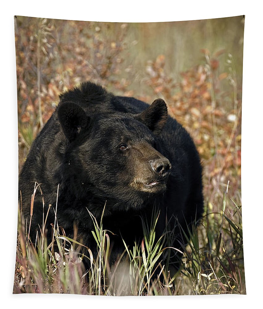 Black Bear Tapestry featuring the photograph Black Bruin by Wildlife Fine Art