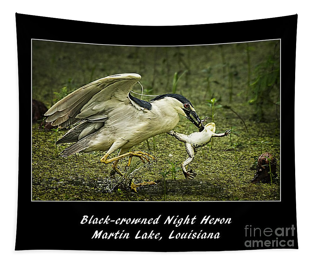 Black-crowned Night Heron At Martin Lake Tapestry featuring the photograph Black-crowned Night Heron At Martin Lake by Priscilla Burgers