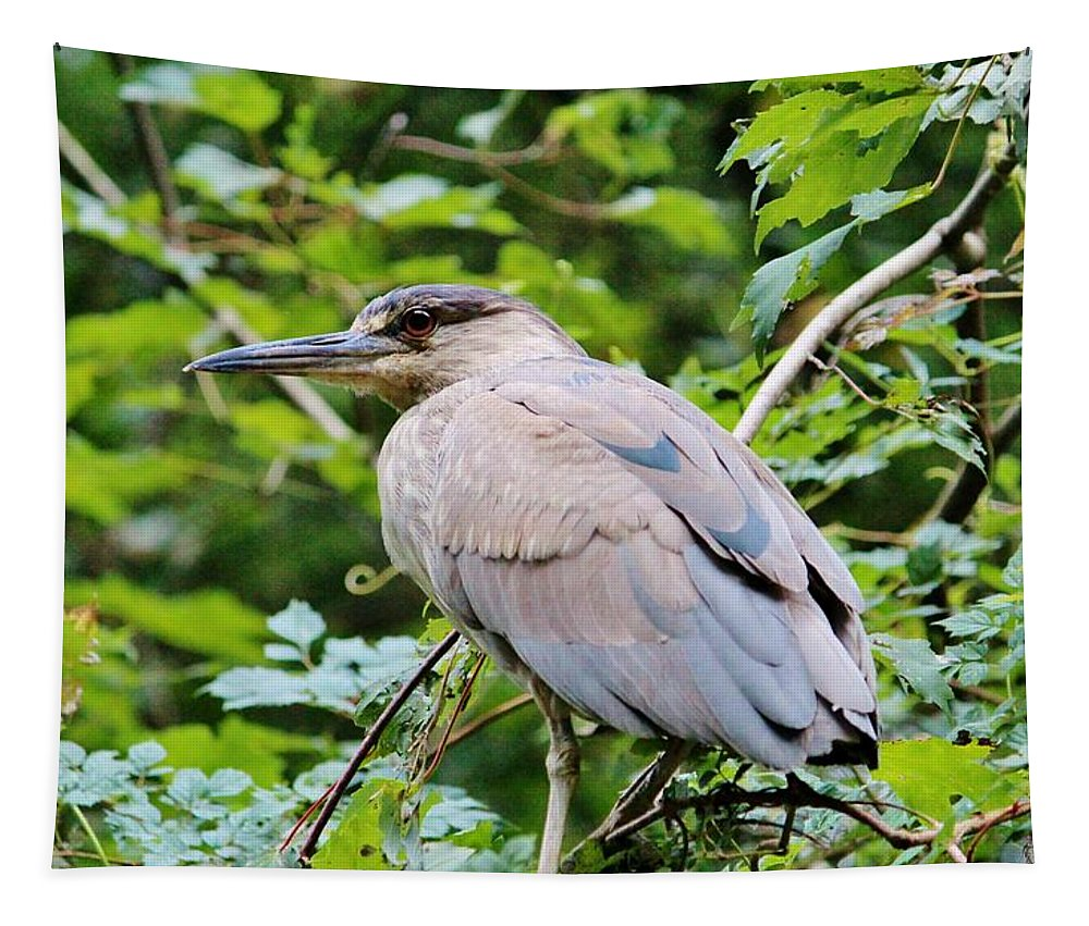 Bird Tapestry featuring the photograph Black Crowned Night Heron by Cynthia Guinn