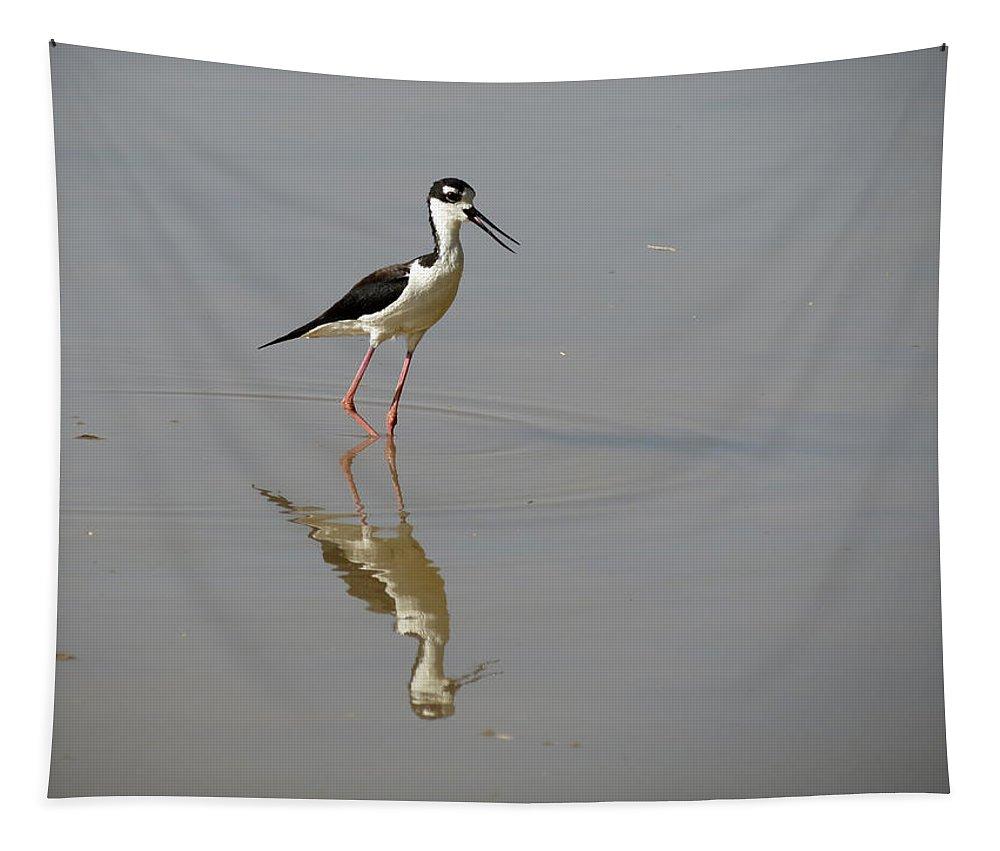Black-necked Stilt Tapestry featuring the photograph Black-necked Stilt by Laurel Powell