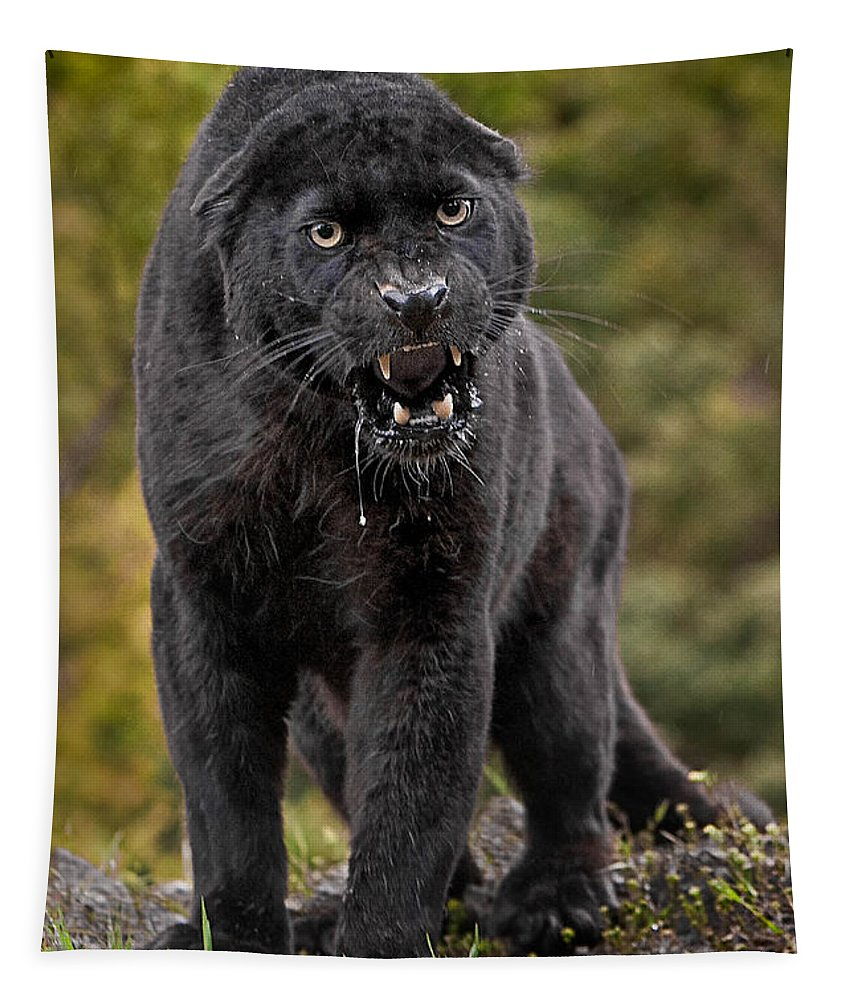Black Panther Tapestry featuring the photograph Black Panther by Jerry Fornarotto