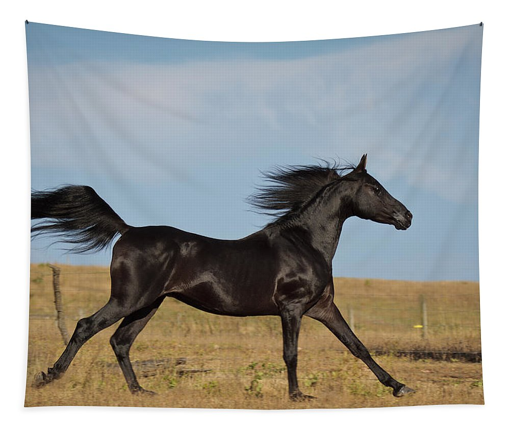 Black Stallion Tapestry featuring the photograph Black Stallion by Wes and Dotty Weber