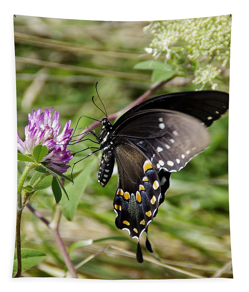 Butterfly Tapestry featuring the photograph Black Swallowtail Butterfly by Deborah Bowie