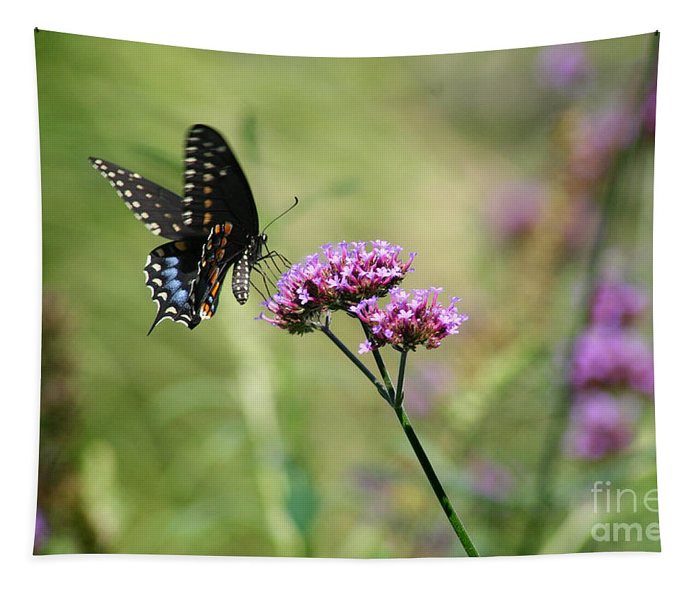 Spicebush Tapestry featuring the photograph Black Swallowtail Butterfly In Field by Karen Adams