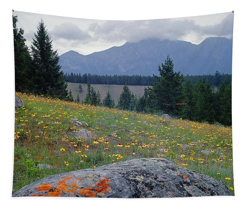 Blackeyed Susans Tapestry featuring the photograph 1m3923-blackeyed Susans by Ed Cooper Photography