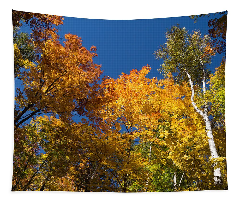 Glorious Fall Colors Tapestry featuring the photograph Blazing Autumn Colors - Just Lift Your Head by Georgia Mizuleva