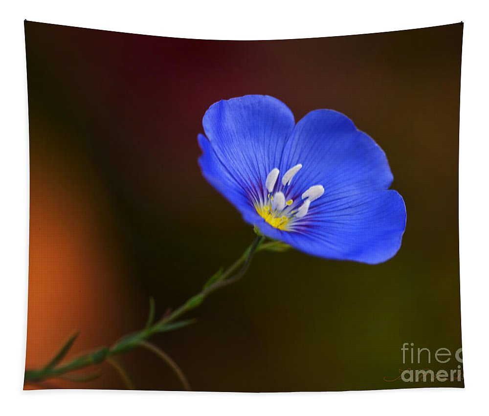 Blue Flax Blossom Tapestry featuring the photograph Blue Flax Blossom by Iris Richardson