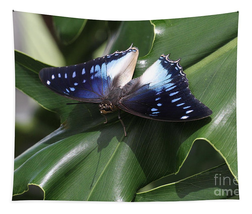 Butterfly Tapestry featuring the photograph Blue-spotted Charaxes Butterfly #2 by Judy Whitton