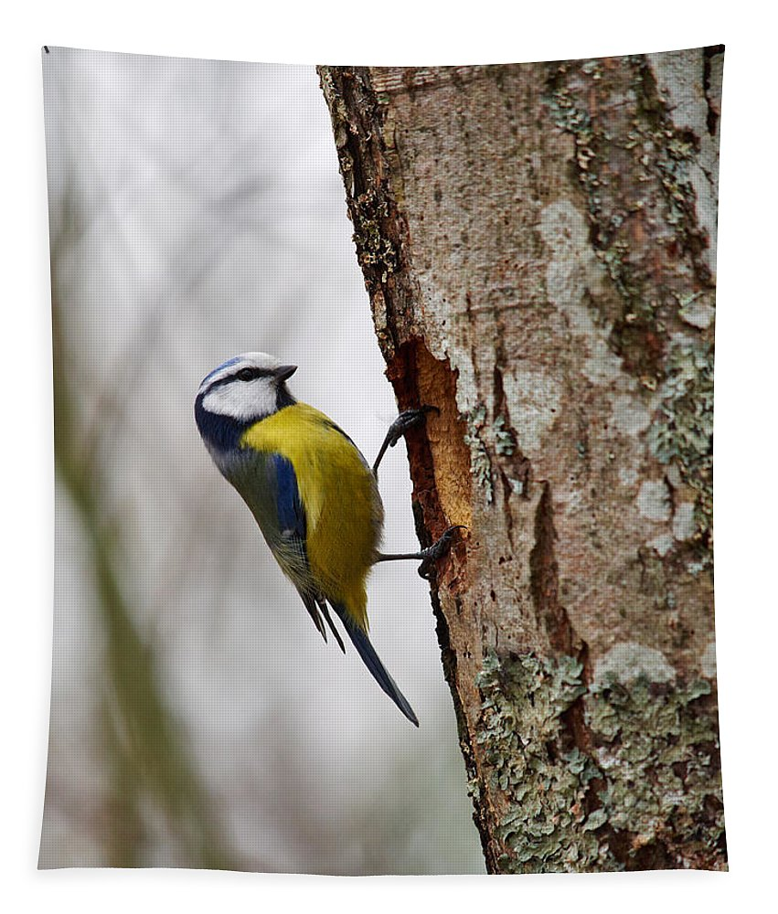 Finland Tapestry featuring the photograph Blue Tit Searching Home by Jouko Lehto