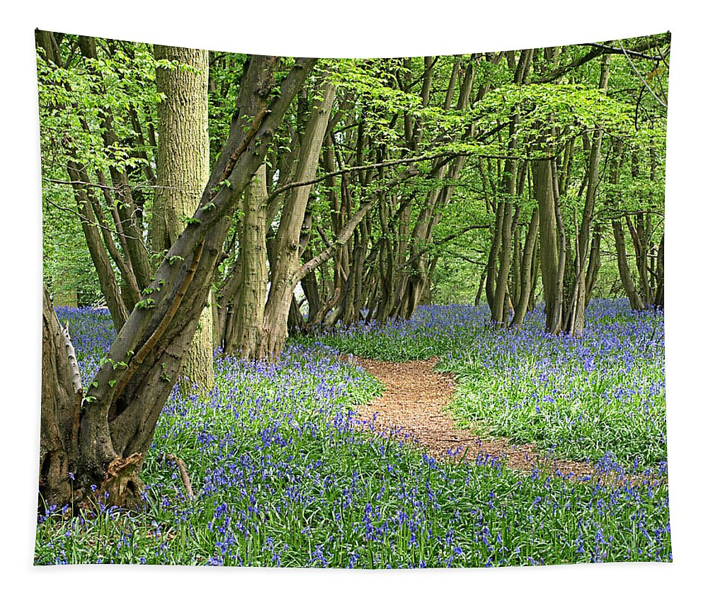 Trees Tapestry featuring the photograph Bluebell Wood 3 by Gill Billington