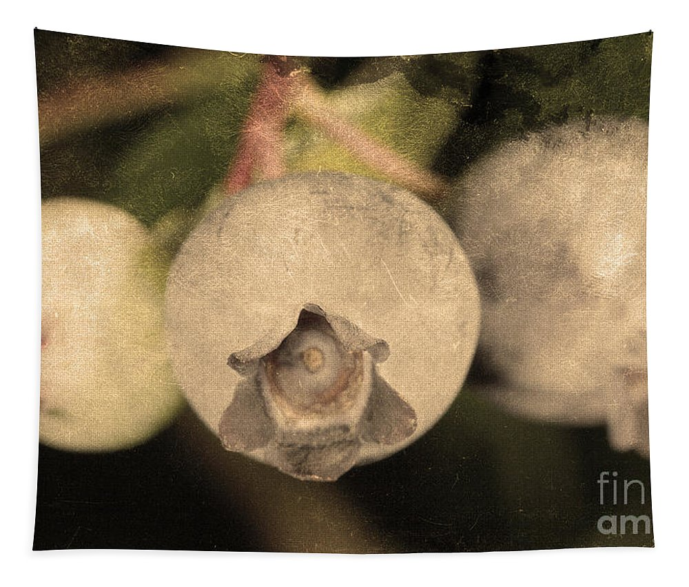 Blueberries On Bush Tapestry featuring the photograph Blueberries On Bush Sepia Tone by Iris Richardson