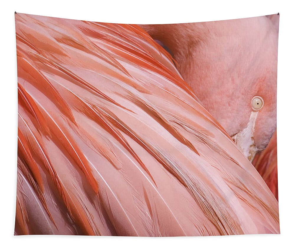 Blushing Flamingo Tapestry featuring the photograph Blushing Flamingo by Wes and Dotty Weber