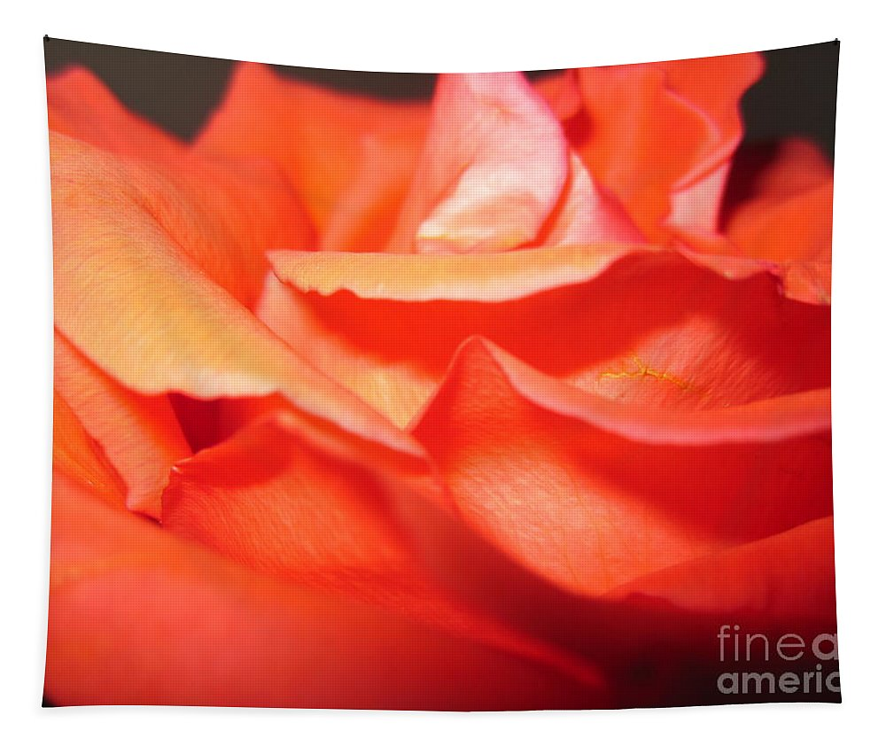 Floral Tapestry featuring the photograph Blushing Orange Rose 6 by Tara Shalton