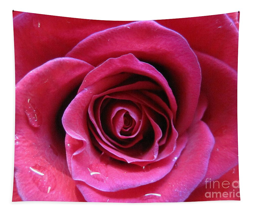 Floral Tapestry featuring the photograph Blushing Pink Rose 3 by Tara Shalton