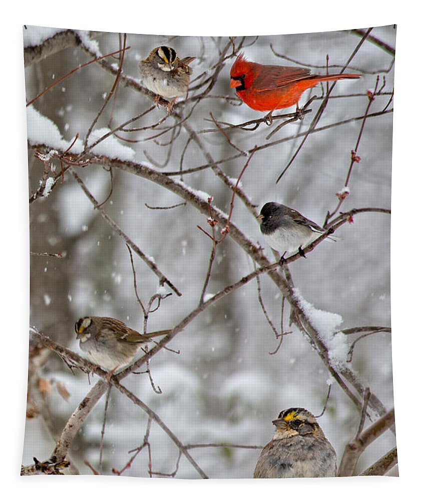 Red Tapestry featuring the photograph Blushing Red Cardinal In The Snow by Betsy Knapp