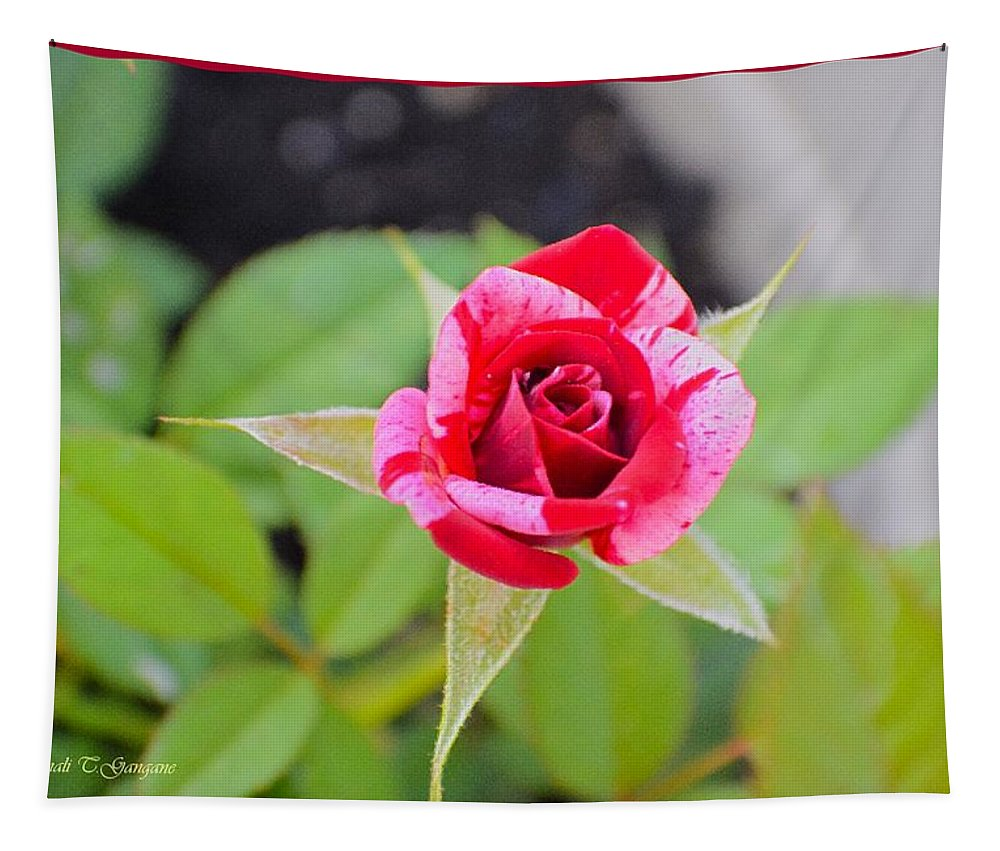 Rose Tapestry featuring the photograph Blushing Rose by Sonali Gangane
