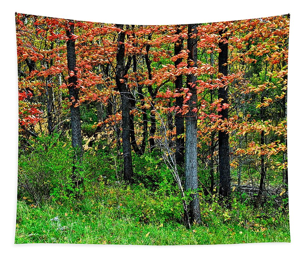 October Tapestry featuring the photograph Blustery October Weather by Frozen in Time Fine Art Photography
