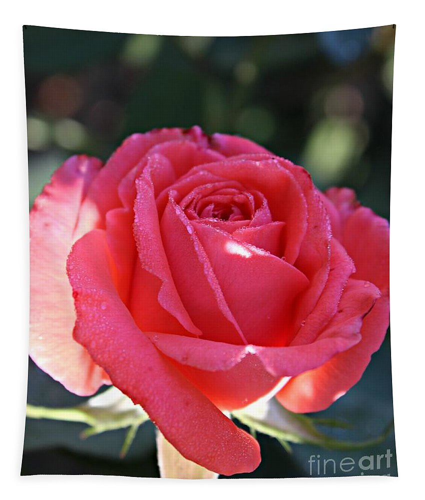 Pink Rose Tapestry featuring the photograph Bokeh Beauty by Clare Bevan