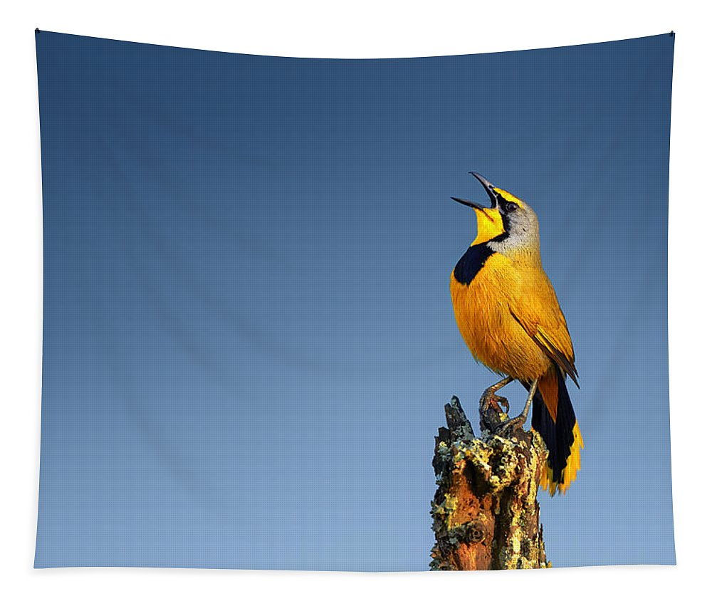 Bokmakierie Tapestry featuring the photograph Bokmakierie bird calling by Johan Swanepoel