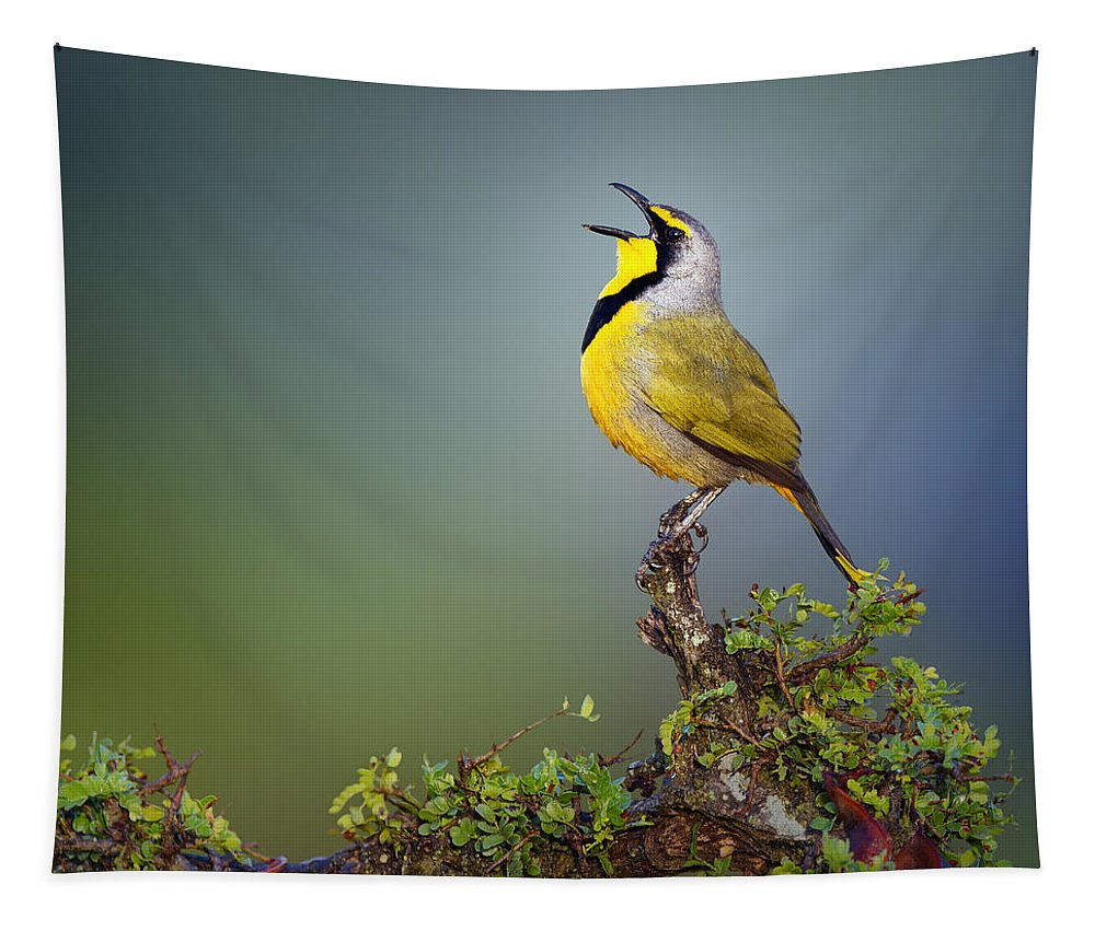 Bokmakierie Tapestry featuring the photograph Bokmakierie Bird - Telophorus Zeylonus by Johan Swanepoel