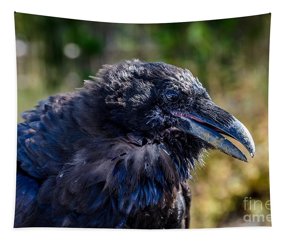 Bold And Demanding Raven Tapestry featuring the photograph Bold And Demanding Raven by Debra Martz