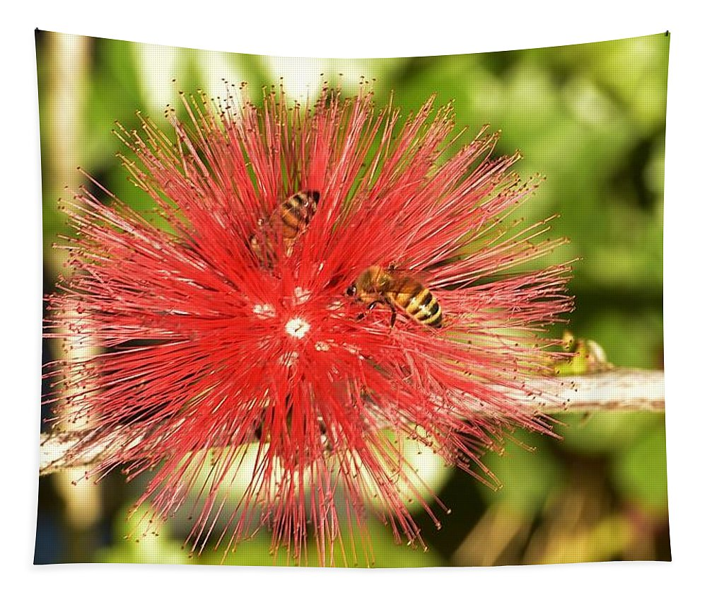Linda Brody Tapestry featuring the photograph Powder Puff Flower With Bees by Linda Brody